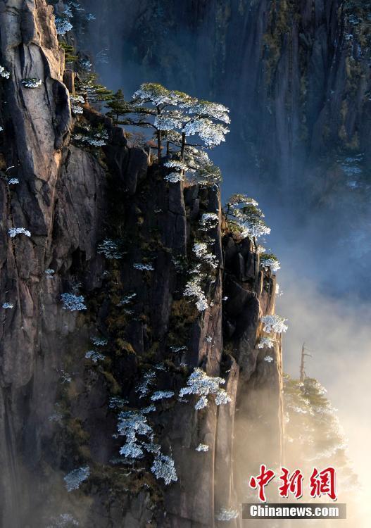 安徽黄山雨后初霁现雾凇美景