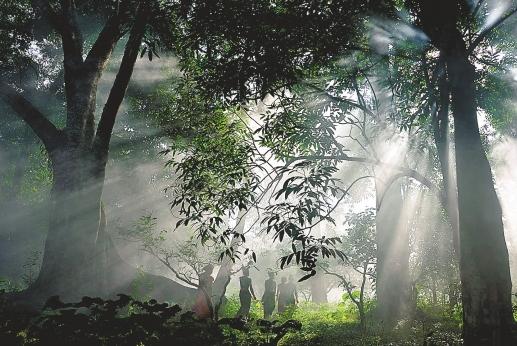 """作为世界茶树原产地的中心地带,""""普洱茶""""的故乡,茶马古道"""
