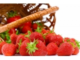 """踏雪寻""""莓"""" 京郊草莓"""