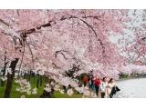 春天西安最适合赏花地推