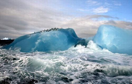 南极洲和南设得兰群岛
