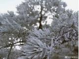 太美了!安徽黄山风景区迎来今冬