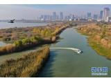 航拍合肥巢湖湖滨国家湿地公园